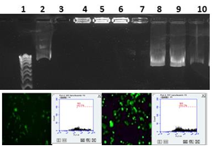 Preparation, characterisation and cell transfection of cationic liposomes in gene therapy